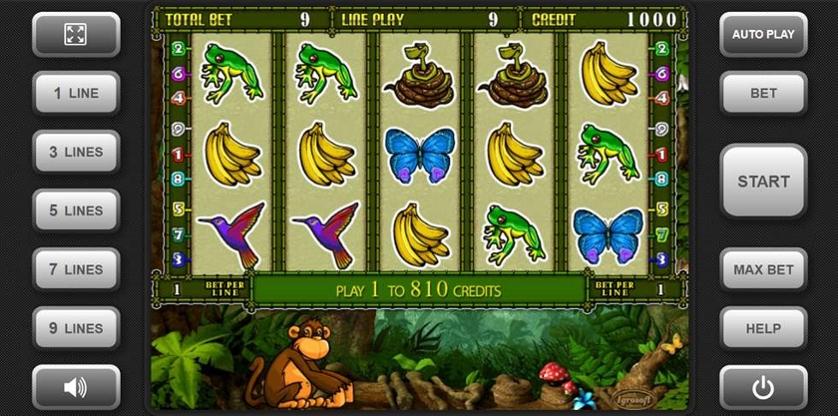 Crazy Monkey 2.jpg