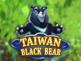 Taiwan Black Bear