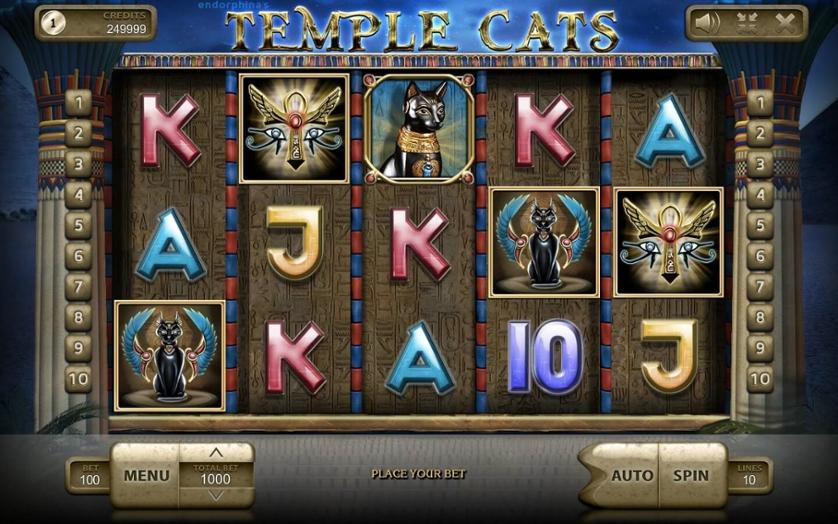 Temple Cats.jpg