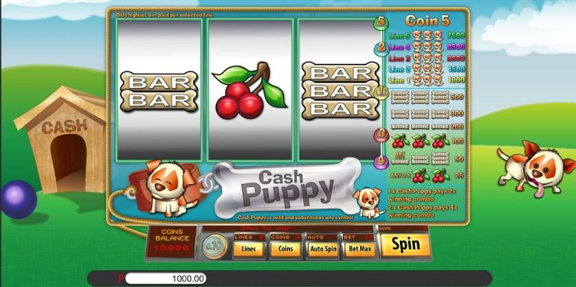 Cash Puppy.jpg